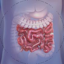 farmacie-torino-benessere-intestinale