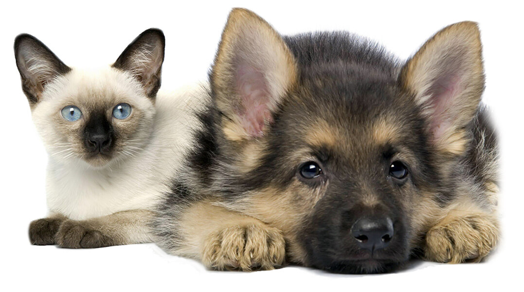 veterinaria-farmacia-torino